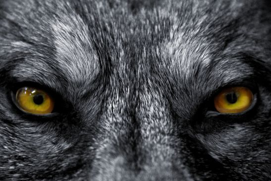 7-bloodcurdling-werewolf-tales-that-will-keep-you-up-at-night-390787